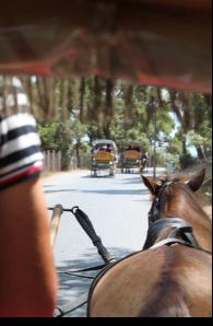 Horse highway Kızıl Adalar, Turkey